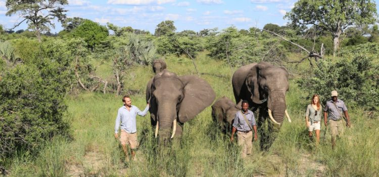 5 African Safari Experiences You Need To Know About