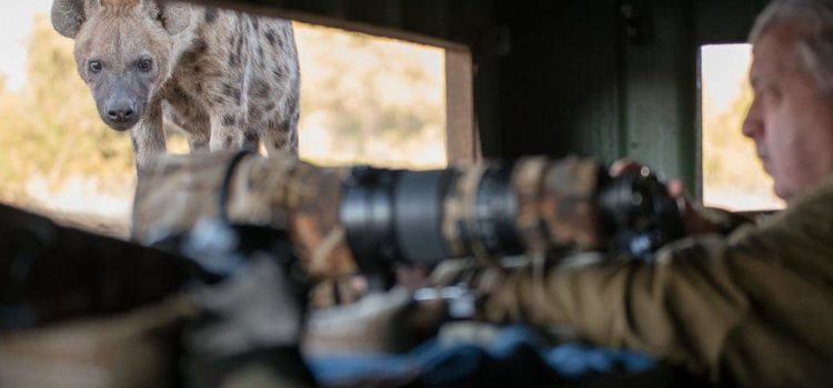 How To Photograph Wildlife On Safari
