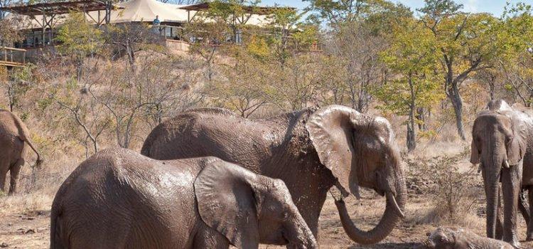 The Elephant Camp