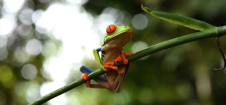 Get Face-To-Face With Costa Rica's Fascinating Wildlife