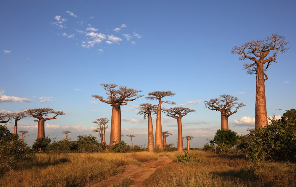 things to see in Madagascar; avenue of baobobs
