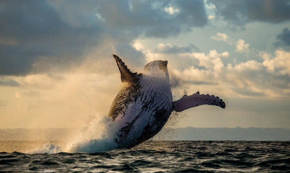 things to see in Madagascar; whale watching