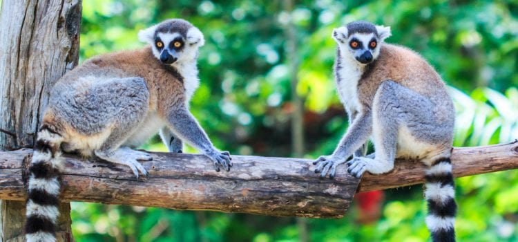 The Sacred & Untold Stories Of Madagascar